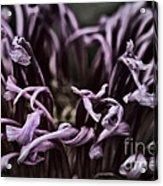 Lazy Flower Acrylic Print by Gabriel Calahorra