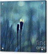 Le Centre De L Attention - Blue S0203d Acrylic Print by Variance Collections