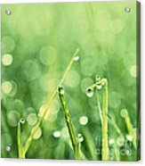 Le Reveil - S02b3 Acrylic Print by Variance Collections