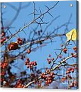 Leaf Among Thorns Acrylic Print