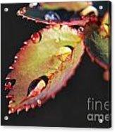 Leaf And Dew Drops Acrylic Print