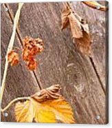 Leaf And Old Wood Fence Acrylic Print