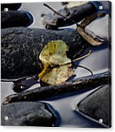 Leaf At River's Edge Acrylic Print