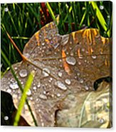 Leaf Beads Acrylic Print