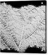 Leaf Design- Black And White Acrylic Print