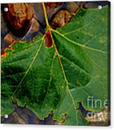 Leaf In The River Acrylic Print
