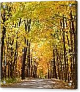 Leaf Lit Path Acrylic Print