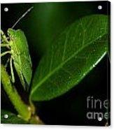 Leaf Me Alone Acrylic Print