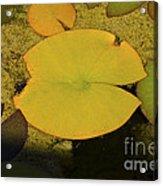 Leaf On A Pond Acrylic Print
