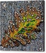 Leaf On The Sidewalk Acrylic Print by Robert Ullmann