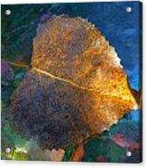 Leaf Portrait 5 Acrylic Print