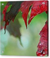 Leaf Shadows Acrylic Print