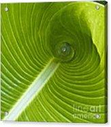 Leaf Tube Acrylic Print