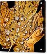 Leafwash Acrylic Print