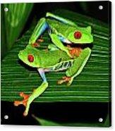 Leap Frog Acrylic Print