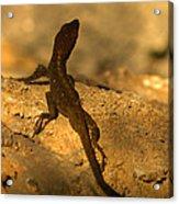 Leapin' Lizards Acrylic Print
