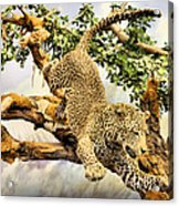 Leaping Leopard Acrylic Print