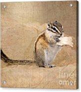 Least Chipmunk Acrylic Print