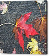 Leave The Leaves Acrylic Print