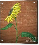 Leavenworth Sunflower  Acrylic Print
