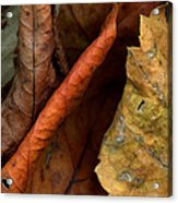 Leaves After Braque Acrylic Print