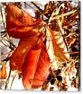 Leaves And Small Berries  Acrylic Print