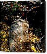 Leaves Around The Tree Trunks Acrylic Print