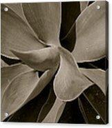 Leaves II - Mono Acrylic Print