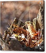 Leaves In Stump Acrylic Print