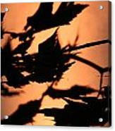Leaves in Sunset Acrylic Print