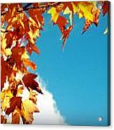 Leaves In The Sky Acrylic Print
