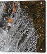 Leaves In The Water Acrylic Print
