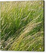 Leaves Of Grass Acrylic Print