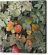 Leaves Of Three   Let It Be Acrylic Print