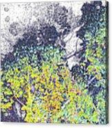 Leaves On A Tree Acrylic Print