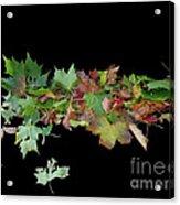 Leaves On Sidewalk Acrylic Print