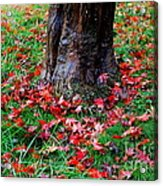 Leaves On The Ground Acrylic Print