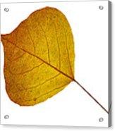Leaves Ten  Acrylic Print