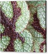 Leaves With Beautiful Texture Acrylic Print
