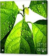 Leaves With Raindrops Acrylic Print by Theresa Willingham