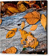 Leaves3 Acrylic Print