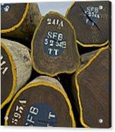 Legally Logged Trees Drc Acrylic Print