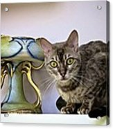 Lemmy Loves My Pottery Collection Acrylic Print