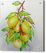 Lemons Acrylic Print by Elena Mahoney