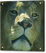 Leo,lion Acrylic Print