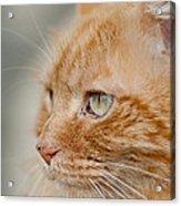 Leo The Kitty Beast Acrylic Print