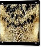 Leopard Eyes Acrylic Print