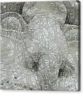 Leospring Acrylic Print