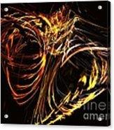 Lepidoptera Acrylic Print