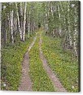 Less Traveled Road Through Aspens Acrylic Print